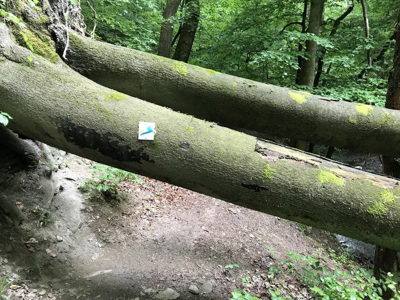 Umgefallener-Baum-mit-Wegemarkierung